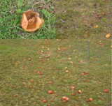 appelgedicht als maal