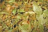 tussenlandbier: met lindebloesem