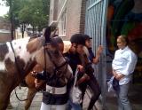 ponies in de baan