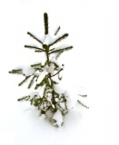 breng uw kerstboom met kluit naar het depot!