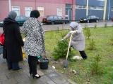 kerstbomen geplant