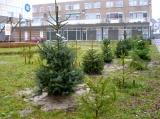 wil je nog een kerstboom planten?