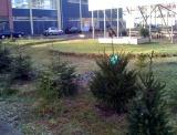 2 nieuwe kerstbomen