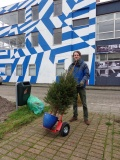 Hoe vervoer je een kerstboom?